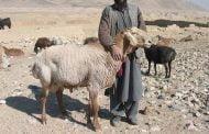 BOLEHKAH HEWAN KURBAN DISEMBELIH DI LUAR HARI TASYRIQ?